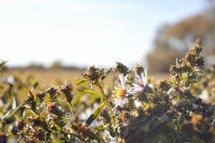 El crecimiento de flores pasado en un campo en otoño imagen de archivo