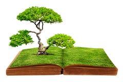 El crecimiento grande del árbol de un libro Fotos de archivo