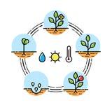 El crecimiento vegetal efectúa el infographics que planta las frutas, proceso de las verduras Estilo plano stock de ilustración