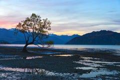 El crepúsculo solitario del árbol Imagenes de archivo