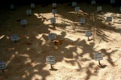El criadero de la tortuga con el huevo marca con etiqueta en la arena Sri Lanka Foto de archivo