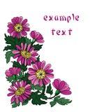 el crisantemo florece la esquina del dibujo Imágenes de archivo libres de regalías