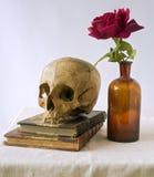 El cráneo en los libros viejos y se levantó Imagen de archivo libre de regalías