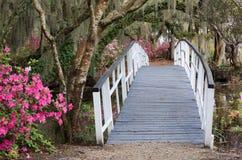 El cruzar en el jardín de la magnolia del SC de Charleston en primavera foto de archivo
