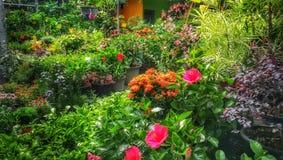 El cuarto de niños decorativo de las plantas verdes y de los almácigos de las plantas tropicales en jardín hace compras fotografía de archivo