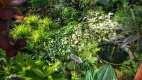 El cuarto de niños decorativo de las plantas verdes y de los almácigos de las plantas tropicales en jardín hace compras Imagen de archivo libre de regalías