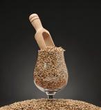 El cubilete con las semillas de la cebada en un fondo negro matizó Foto de archivo