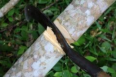 El cuchillo grande cortó el árbol de goma imagen de archivo libre de regalías