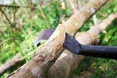 El cuchillo grande cortó el árbol de goma imágenes de archivo libres de regalías