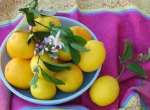 El cuenco de limones frescos en un magenta elegante, el azul y el amarillo imprimen el mantel Fotos de archivo libres de regalías