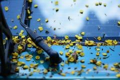 el cuerpo del coche sucio de las flores y de las hojas Fotografía de archivo libre de regalías