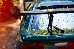 el cuerpo del coche sucio de las flores y de las hojas Imagen de archivo libre de regalías