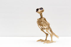 El cuervo Imagenes de archivo