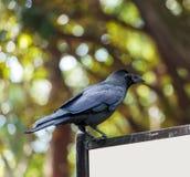 El cuervo negro se está sentando en una cartelera, Tokio, Japón Copie el espacio para el texto imagen de archivo libre de regalías