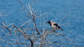 El cuervo y el mar almacen de metraje de vídeo