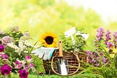 El cultivar un huerto Imágenes de archivo libres de regalías