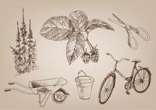 El cultivar un huerto Imagen de archivo libre de regalías