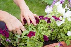 El cultivar un huerto Foto de archivo libre de regalías