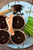 El cultivar un huerto. Imagen de archivo libre de regalías