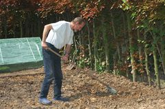 El cultivar un huerto. Imagen de archivo