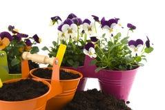 El cultivar un huerto con el germen y las plantas Foto de archivo