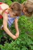 El cultivar un huerto de dos muchachas Fotos de archivo libres de regalías