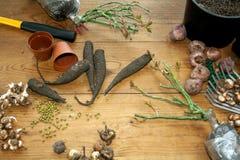 El cultivar un huerto de la afición Rizomas, almácigos y utensilios de jardinería en un fondo de madera rústico Trabajo estaciona Fotos de archivo libres de regalías