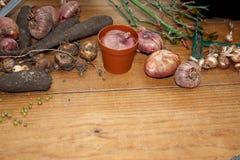 El cultivar un huerto de la afición Rizomas, almácigos y utensilios de jardinería en un fondo de madera rústico Trabajo estaciona Imagen de archivo