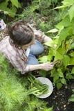 El cultivar un huerto de la mujer joven Foto de archivo libre de regalías