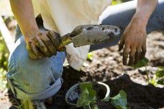 El cultivar un huerto de la mujer joven. Foto de archivo libre de regalías