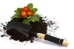 El cultivar un huerto de la primavera Imagen de archivo