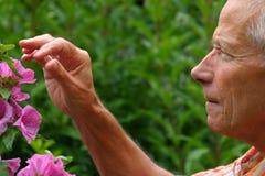 El cultivar un huerto de un más viejo hombre Imagen de archivo libre de regalías