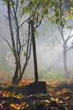 El cultivar un huerto del otoño Imagen de archivo