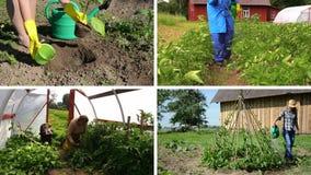 El cultivar un huerto ecológico en granja rural Acorta el collage metrajes