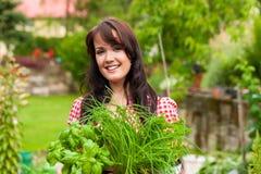 El cultivar un huerto en el verano - mujer con las hierbas Foto de archivo