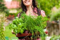 El cultivar un huerto en el verano - mujer con las hierbas Foto de archivo libre de regalías