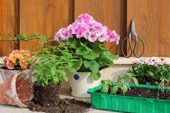El cultivar un huerto en primavera Fotografía de archivo