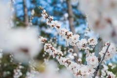 El cultivar un huerto en resorte Fotografía de archivo libre de regalías