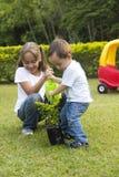 El cultivar un huerto feliz de los niños Foto de archivo