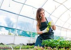 El cultivar un huerto hermoso de la mujer joven Imagen de archivo libre de regalías