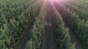 El cultivar un huerto, la madre y el padre con el niño pequeño en hombros cosechan en manzanar almacen de video