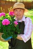 El cultivar un huerto mayor de la mujer Foto de archivo