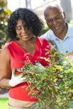 El cultivar un huerto mayor de los pares de la mujer del hombre del afroamericano Fotos de archivo
