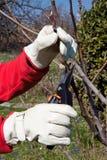 El cultivar un huerto, poda Imagen de archivo