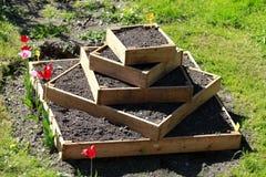 El cultivar un huerto urbano con las patatas Foto de archivo