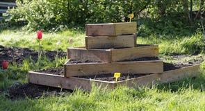 El cultivar un huerto urbano con las patatas Fotografía de archivo libre de regalías