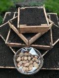 El cultivar un huerto urbano con las patatas Imagenes de archivo