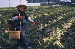 El cultivar un huerto urbano en Japón imágenes de archivo libres de regalías