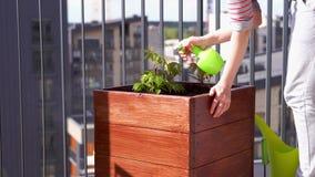El cultivar un huerto y horticultura uvas de ni?a crecientes en una caja en una terraza en la ciudad almacen de video