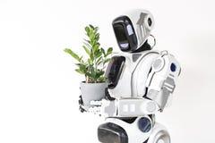 El cyborg moderno está creciendo el houseplant Imagenes de archivo